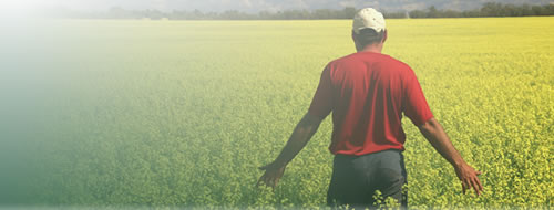 Photo of a farmer standing in a field